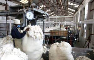 cotton industry