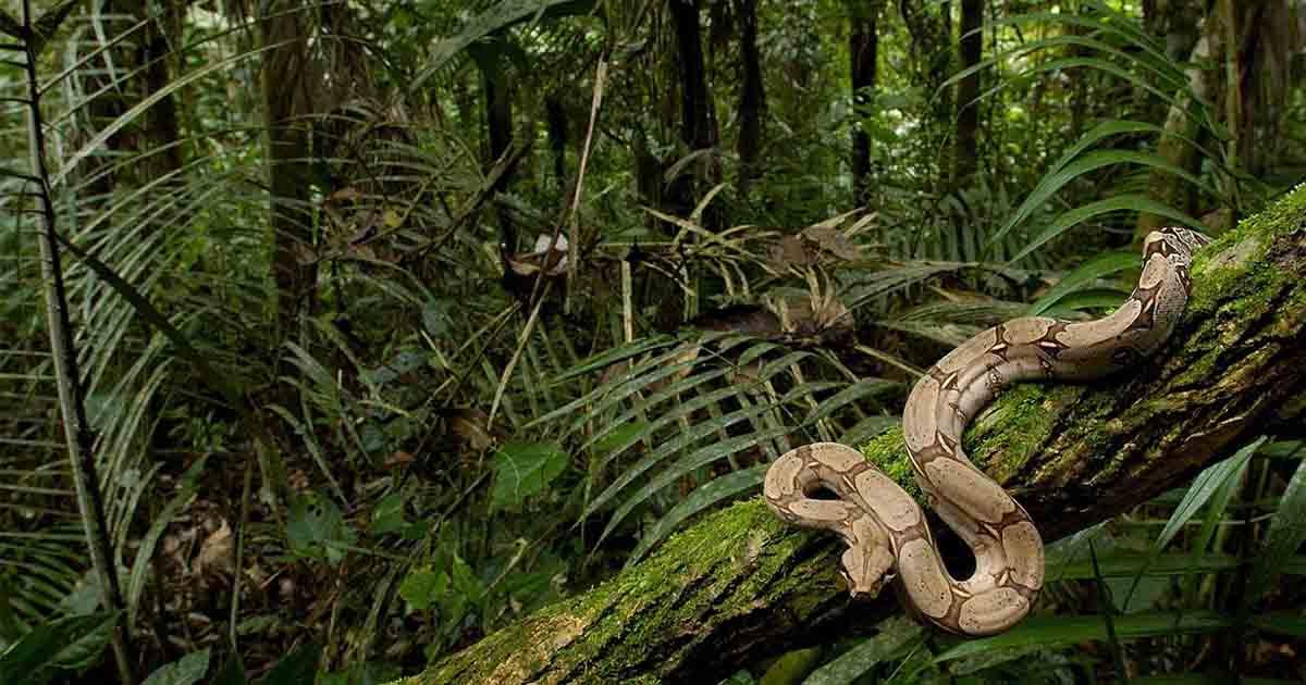 ecological paradises