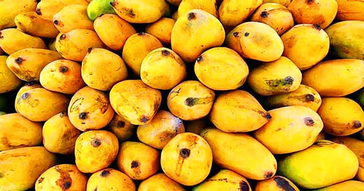Japan approves Pakistan's mango facility for exports: Abdul Razzak Dawood