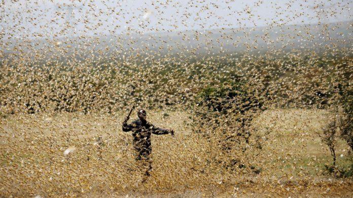 Pakistan fights off locust