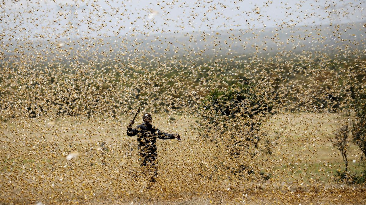 Pakistan uses drones to fight off locust-led crisis - Global ...